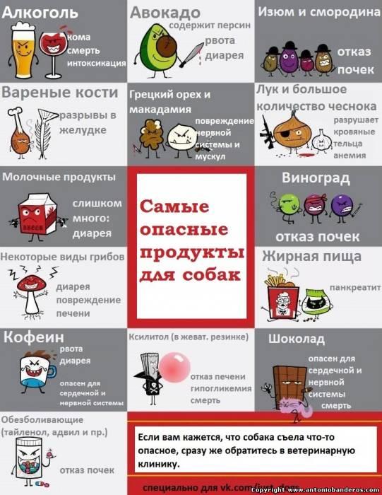 аллергия на корм у собак симптомы